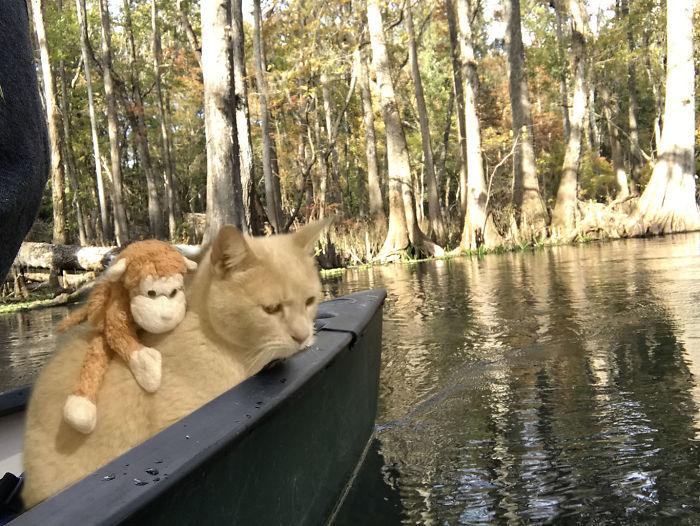 Photoshop výzva od Koko Sempai – pomôžte jeho mačke cestovať po svete!