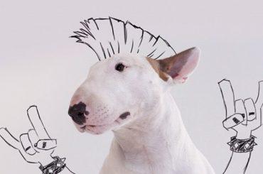 Internet neprestáva prekvapovať. Dokresli svoje domáce zviera a pomôž mu prežiť dobrodružstvo!