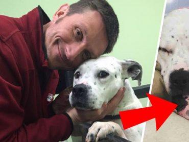 Mladý pár si chcel adoptovať psa: Ani vo sne však nečakali, ako to celé dopadne!