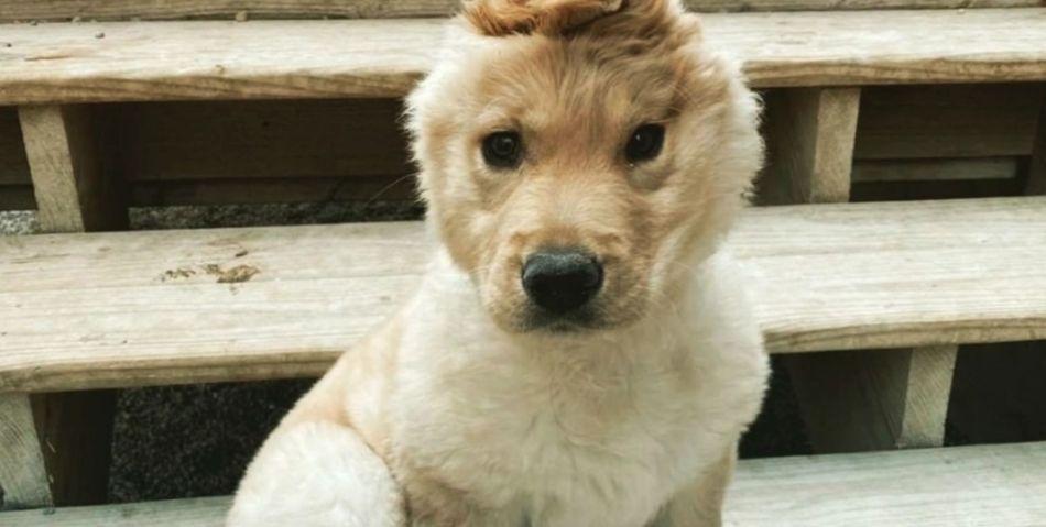 Lásku si zaslúžia aj zvieratá, ktoré majú nejaké nedostatky: TOTO šteniatko sa dosť odlišuje od ostatných psov! V čom je tak výnimočné!?