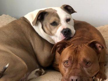Video vo vnútri: Psia bratská láska, ktorá dojala internet