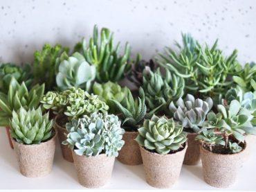 Máte radi rastliny!? Inšpirujte sa týmito dizajnovými kúskami!