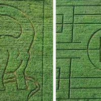 Neďaleko Trnavy otvorili unikátny kukuričný  labyrint