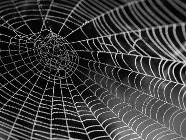 Pavúk so zaujímavým sfarbením: Aj Vám pripomína legendárneho Jokera?