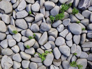 Našla veľmi netypický kameň. Veď vyzerá ako jedlo!
