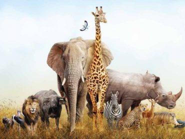 Komunikácia v živočíšnej ríši: Ako sa dorozumievajú zvieratá!?