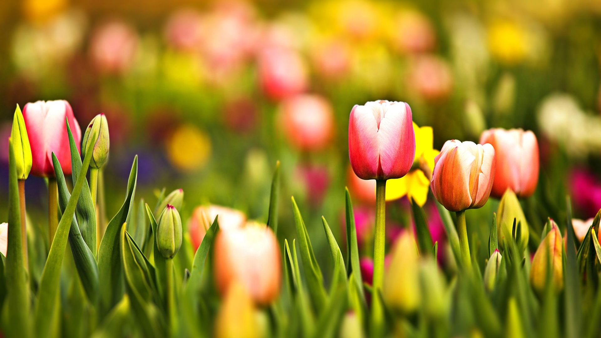Najkrajšie jarné kvety na svete! Nájdete v rebríčku obľúbených aj Vy ten svoj!?
