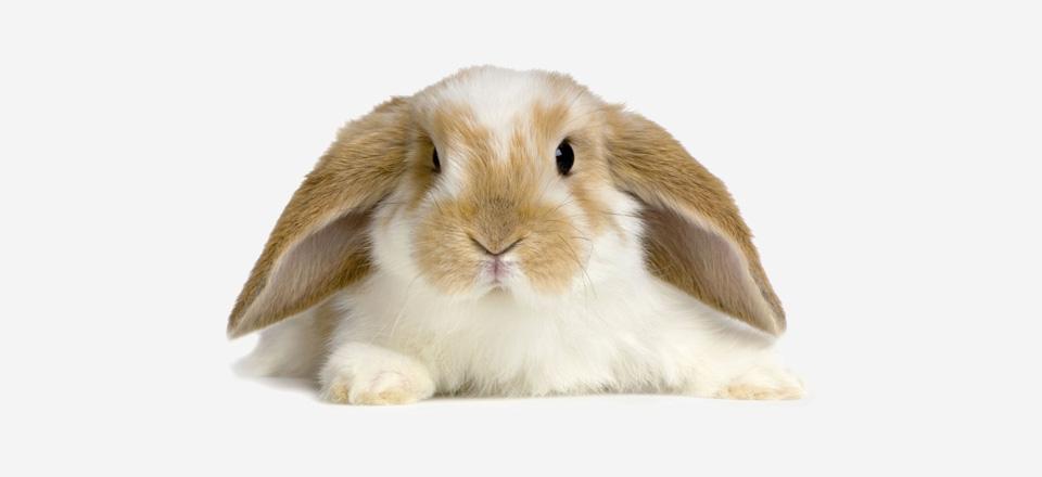 Ako porozumieť reči králikov!? Isté prejavy domáceho maznáčika Vás skutočne prekvapia!