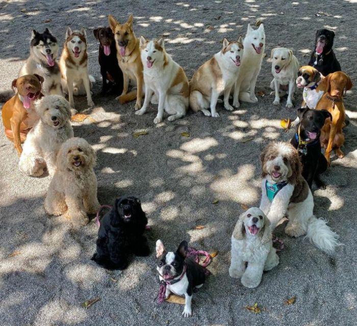 srdce zo psov - psie centrum Woof Pack