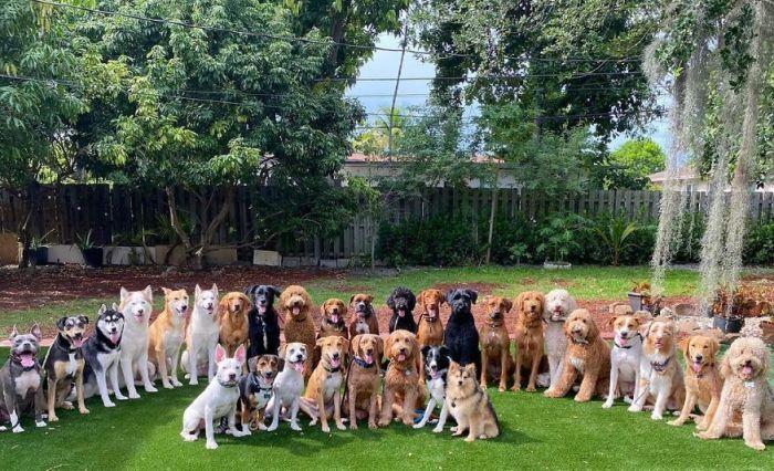 hromadná fotografia psov