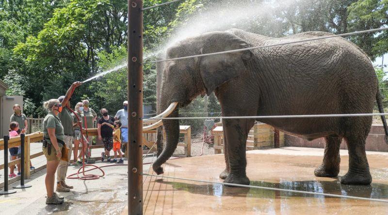 slon v ZOO