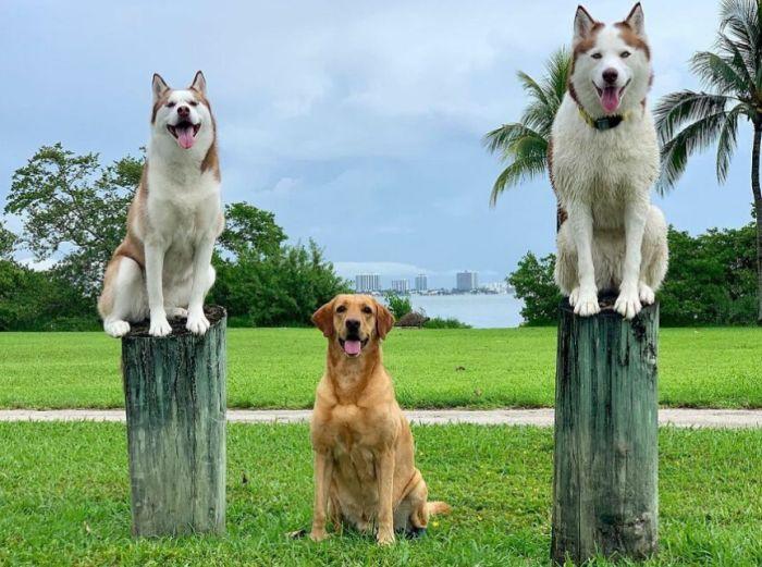 talentované psy - psie centrum