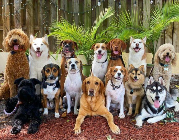 psia fotografia - psie centrum