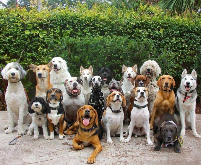 psy sa fotia v parku
