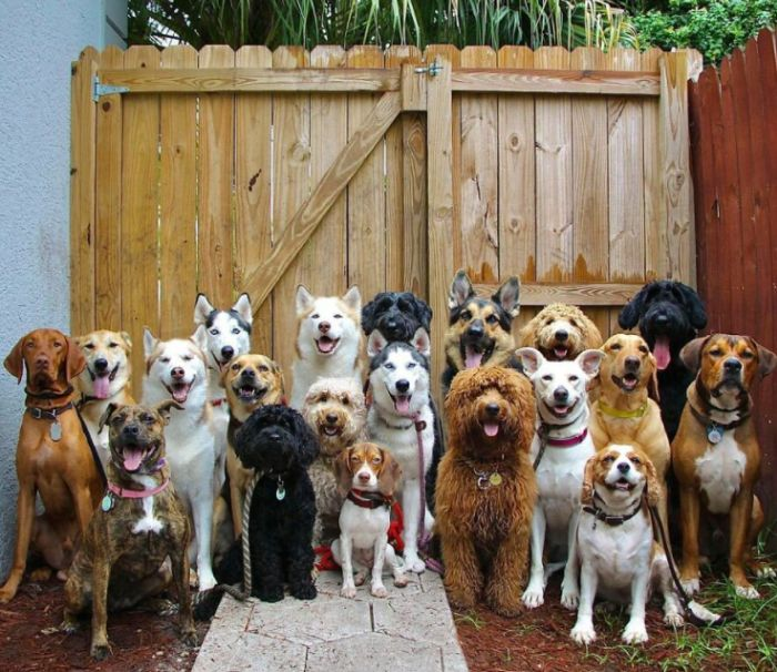 psy z Woof Packu - psie centrum