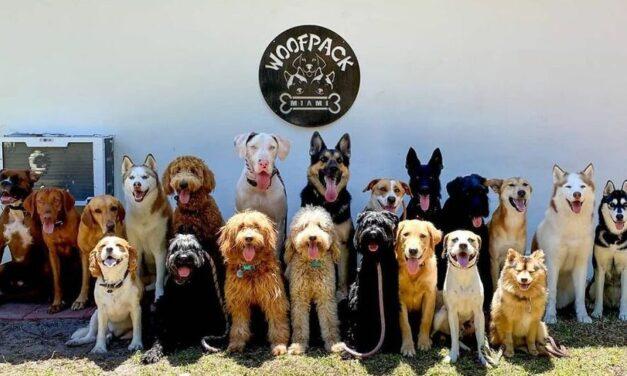 Woof Pack je mimoriadne psie centrum. Okrem výcviku vašich domácich miláčikov dokáže naučiť psov usmiať sa do objektívu!